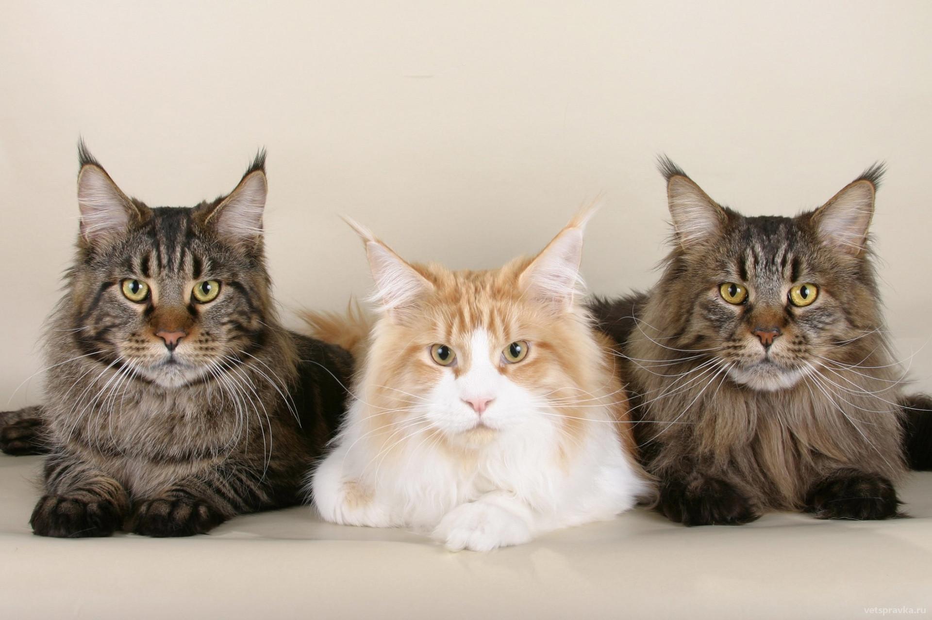 Какие прививки нужны котятам и кошкам