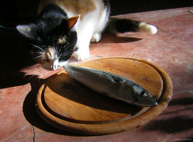 Профилактика гельминтов у кошек