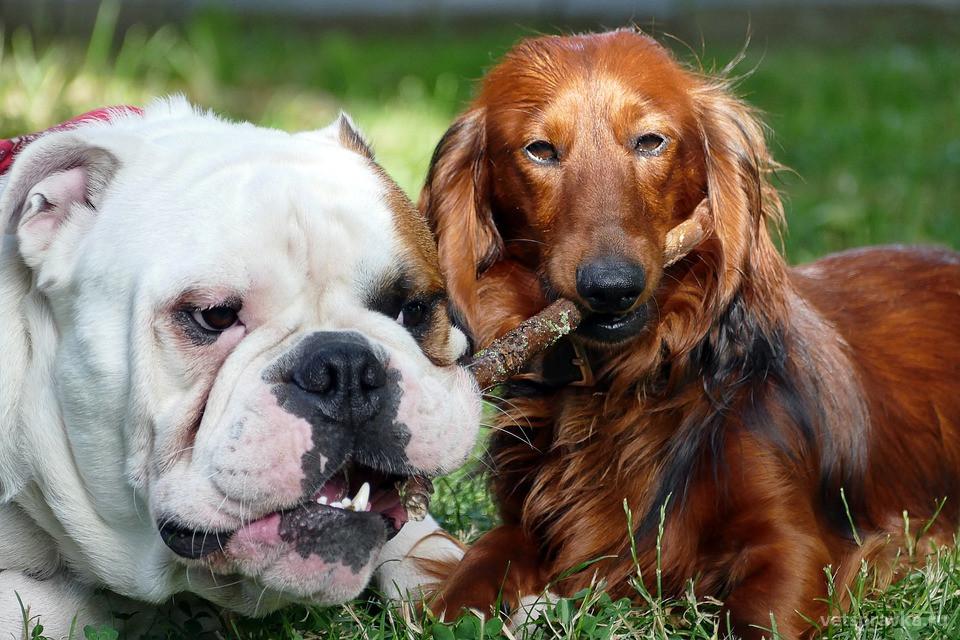 Общая профилактика заболеваний у домашних животных