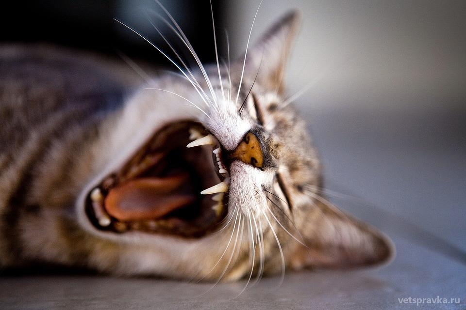 Как ухаживать за зубами у собак и кошек