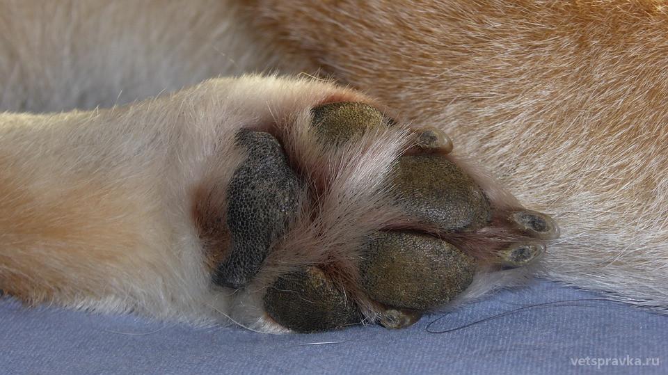 Зачем стричь когти собакам?