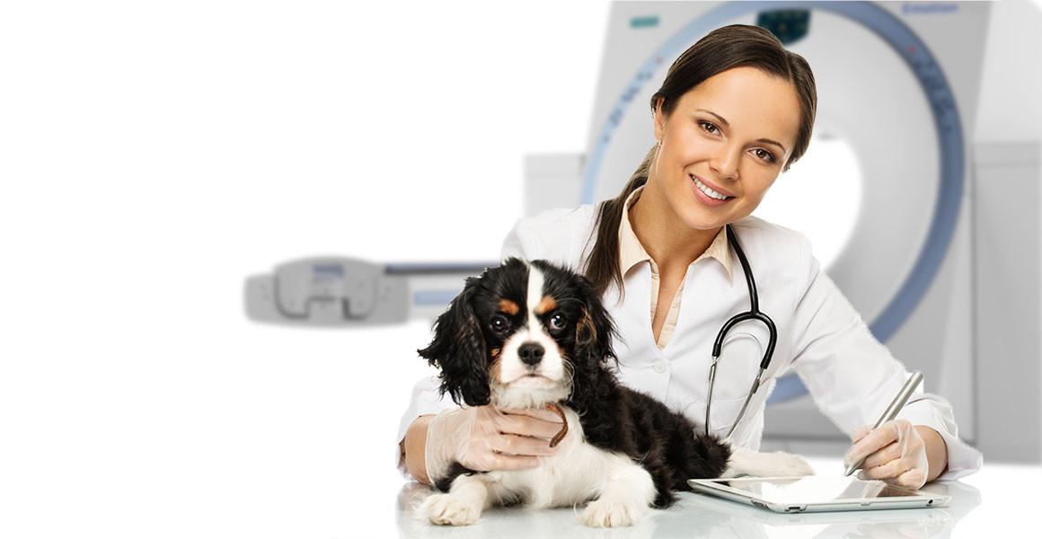 МРТ в ветеринарной практике