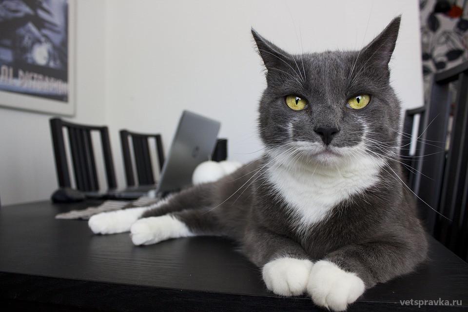 Мочекаменная болезнь у кошек – что это?