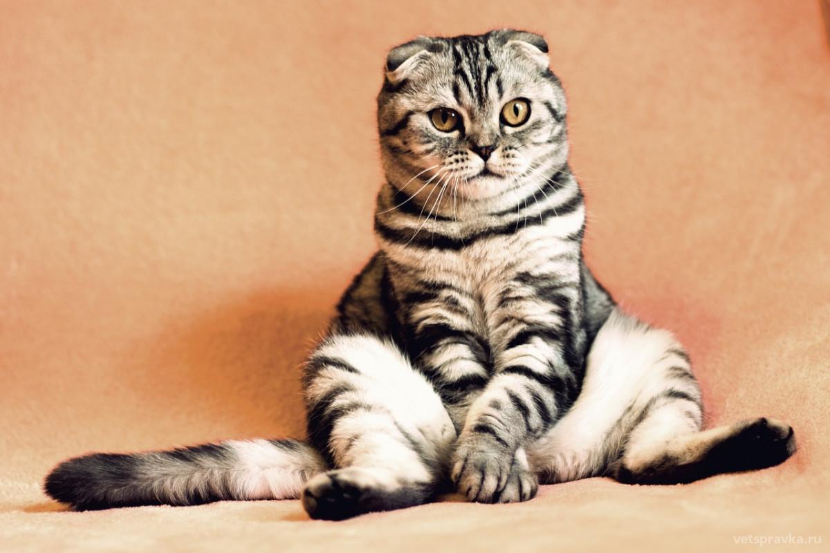 Как ухаживать за котом после кастрации?