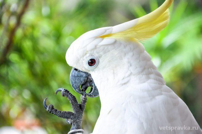 Особенности ухода за попугаями