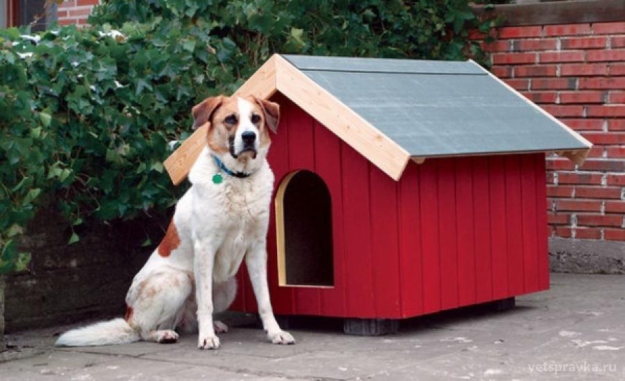 Содержание собак за городом