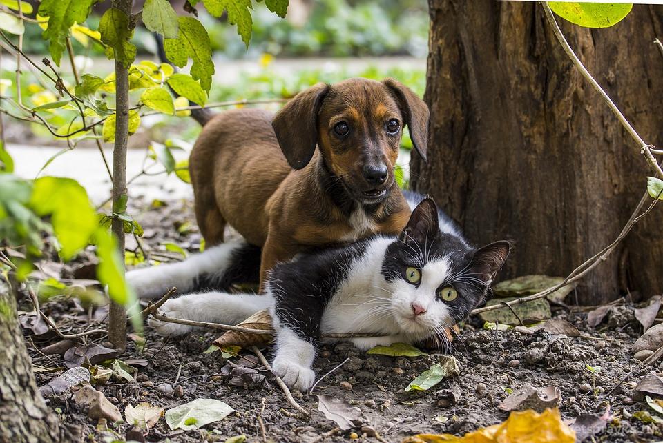 Как подружить кошку и собаку в одном доме?