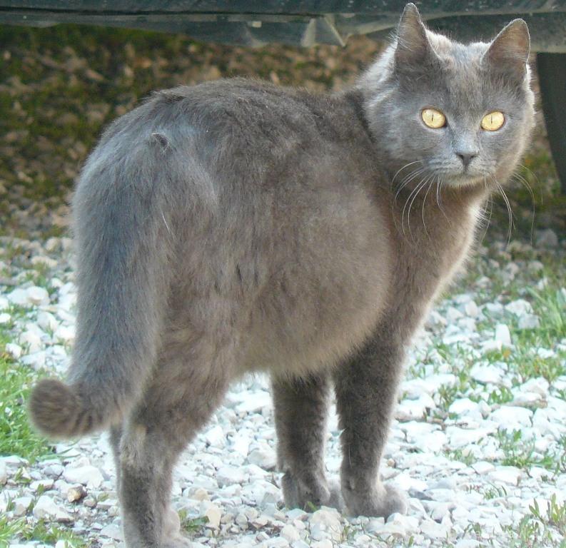 Беременность у кошки: признаки, продолжительность, уход