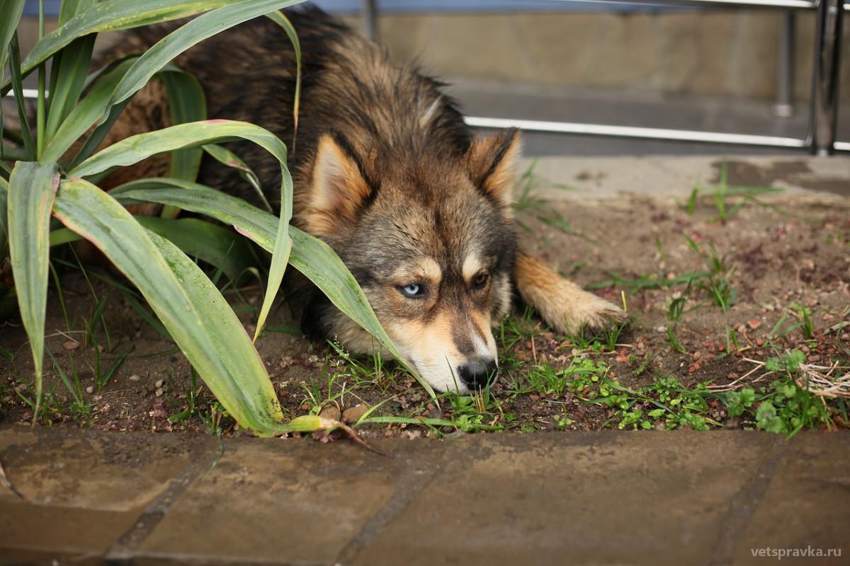 Почему у животных бывают глаза разного цвета?