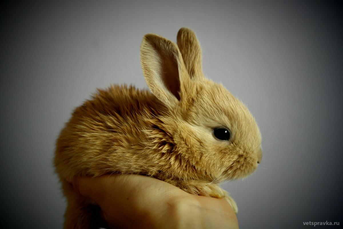 Уход за кроликами в домашних условиях
