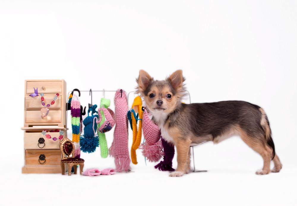 Как выбрать одежду для собак?