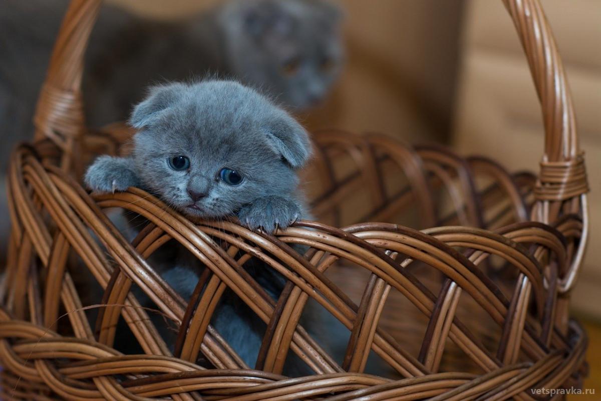 Как ухаживать за котенком?