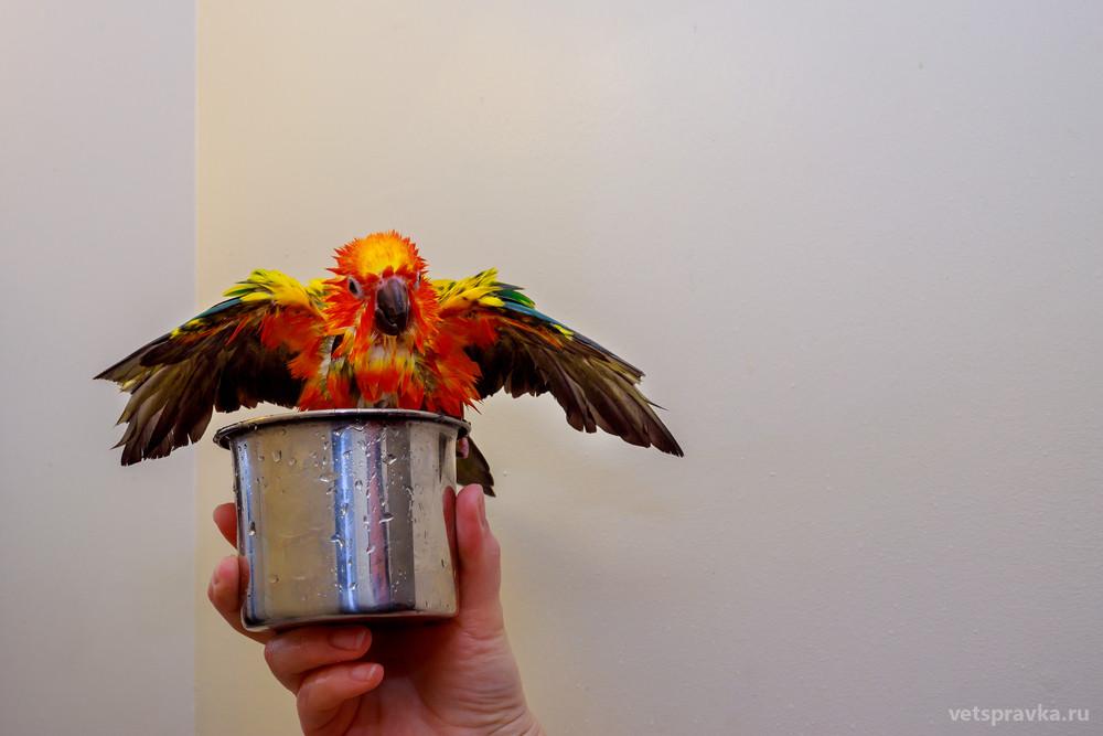 Нужно ли купать попугая?