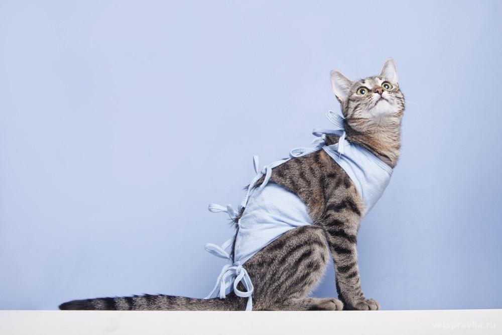 Памятка перед кастрацией и стерилизацией кота/кошки