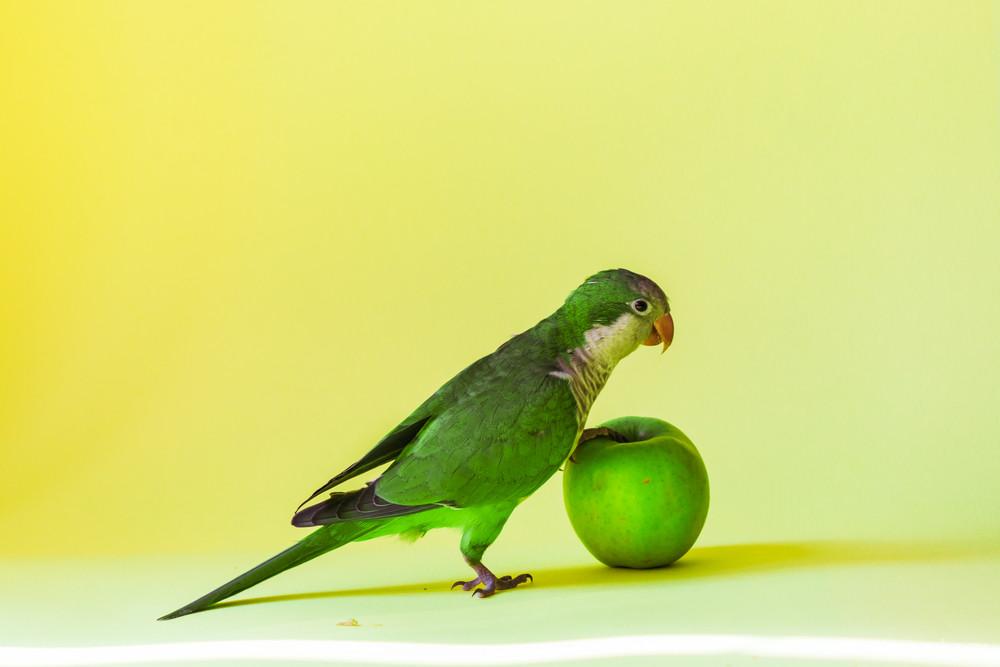Корм попугаев — как выбрать правильный?